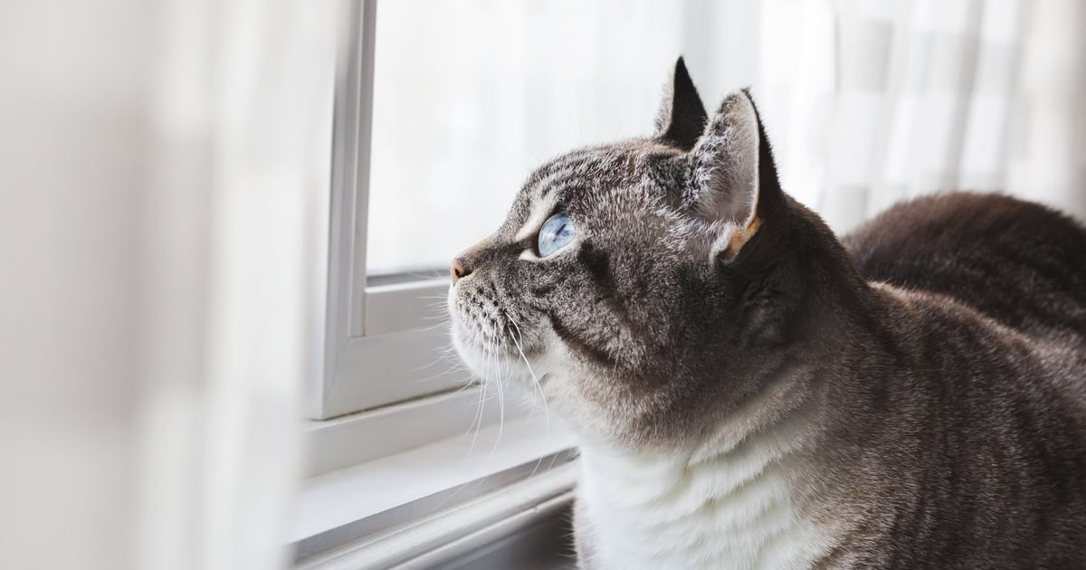 How Long Can Cats Be Left Alone? Experts Weigh In