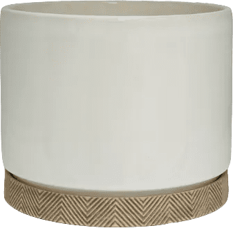 allen + roth 10-Inch Cylinder with Saucer