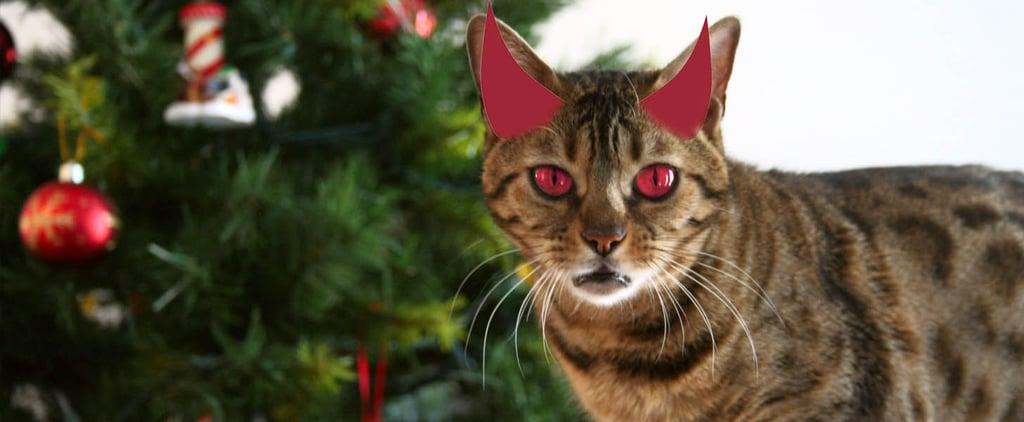Cats vs. Christmas Trees