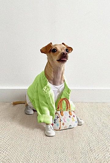 Boobie Billie Dog Outfits on Instagram