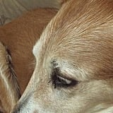 Pet Pic of the Day: Up Close and Personal