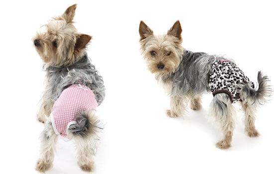 Dog Model Dog Panties