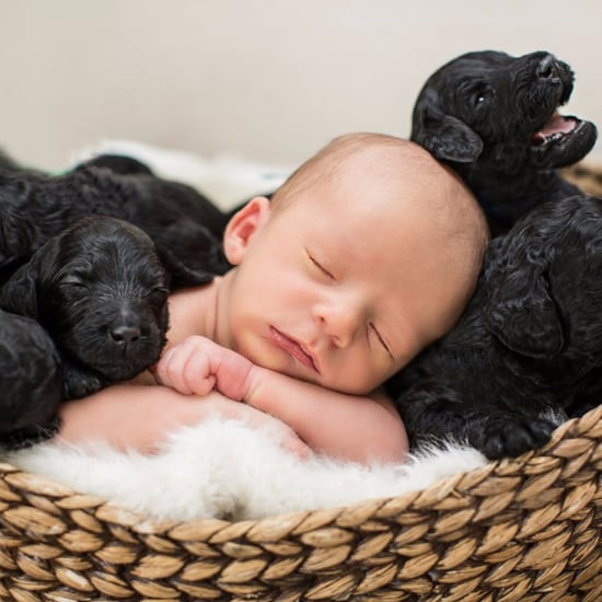 Newborn Baby and Puppies Photo Shoot