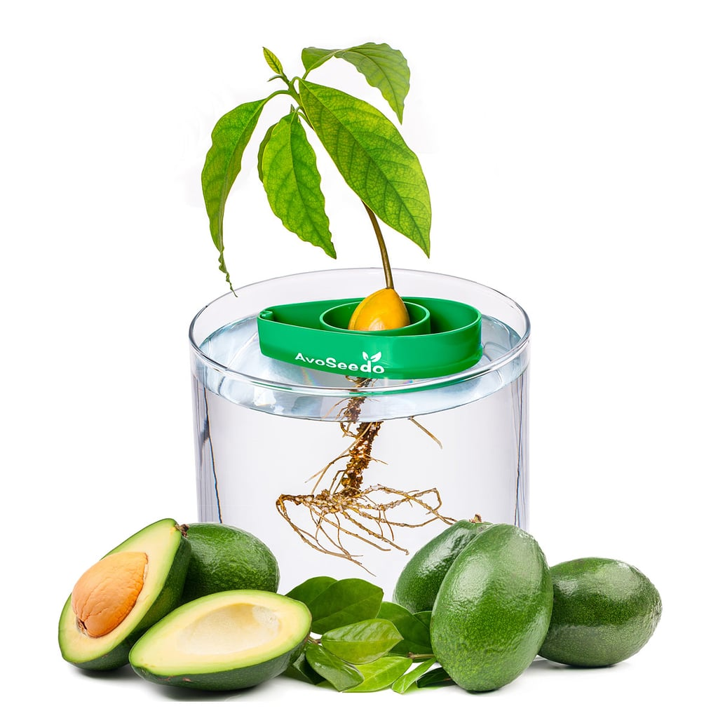 Avocado Tree Starter Kit ($20)