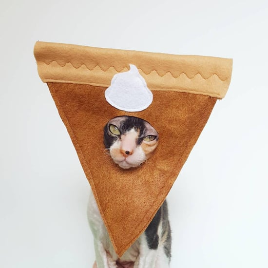 Shop Etsy's Adorable Pumpkin Pie Halloween Costume For Cats