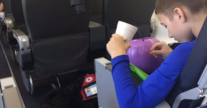 Boy And Service Dog Kicked Off American Airlines Flight
