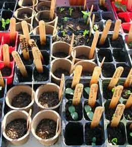 Weekend Well-Being:  Start Your Garden Now