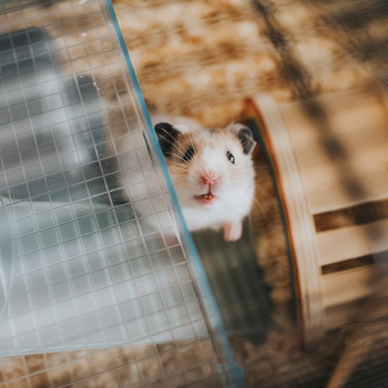 How Do I Stop My Hamster from Escaping the Cage?