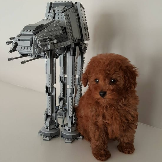 Jacob Tremblay's Dog