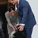 بدا الأمير هاري وميغان ظريفين جدّاً عندما قاما بمداعبة كلب الرئيس مايكل هيجنز أثناء زيارتهما لأيرلندا في شهر يوليو من عام 2018.
