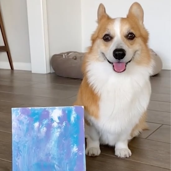 TikTok's Dog Painting Challenge | Funny Videos