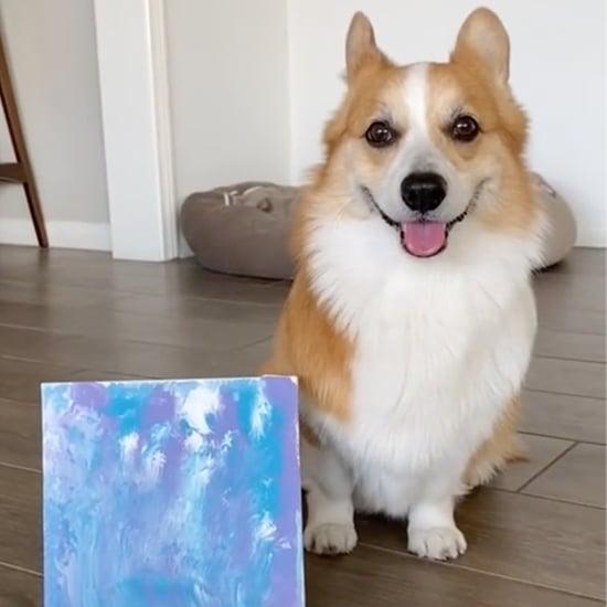 TikTok's Dog Painting Challenge   Funny Videos