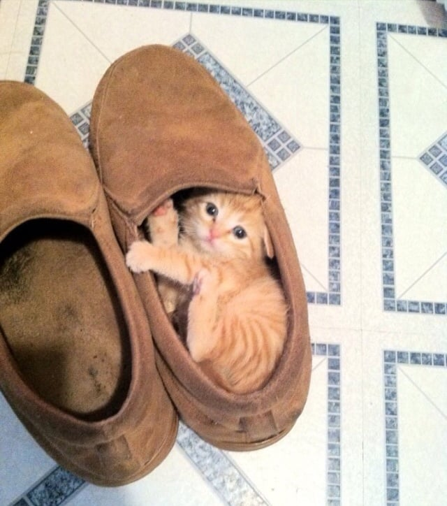 """Ummm someone stole my shoe . . ."" Source: Imgur user deckpumps_n_deldos"