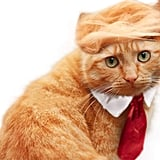 Trump Cat Costume