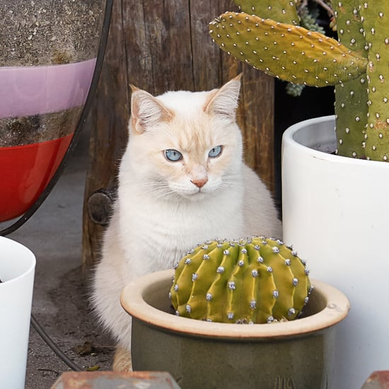 كم صورة يلتقط أصحاب القطط لقططهم كل يوم؟