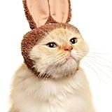 Kitan Club Cat Bunny Cap