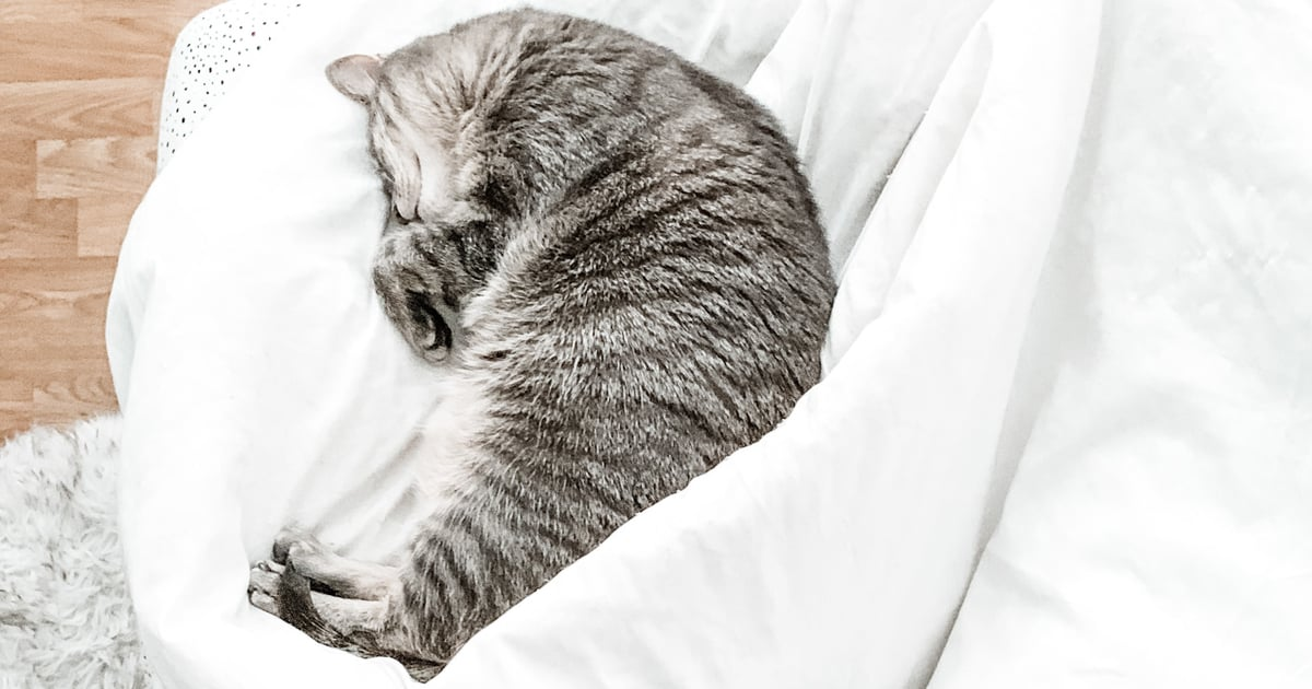 Why Your Cat Sleeps at Your Feet, According to an Animal Behavior Expert