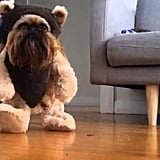 Digby in Action (as an Ewok)