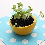 Start Seedlings in a Citrus Peel Pot