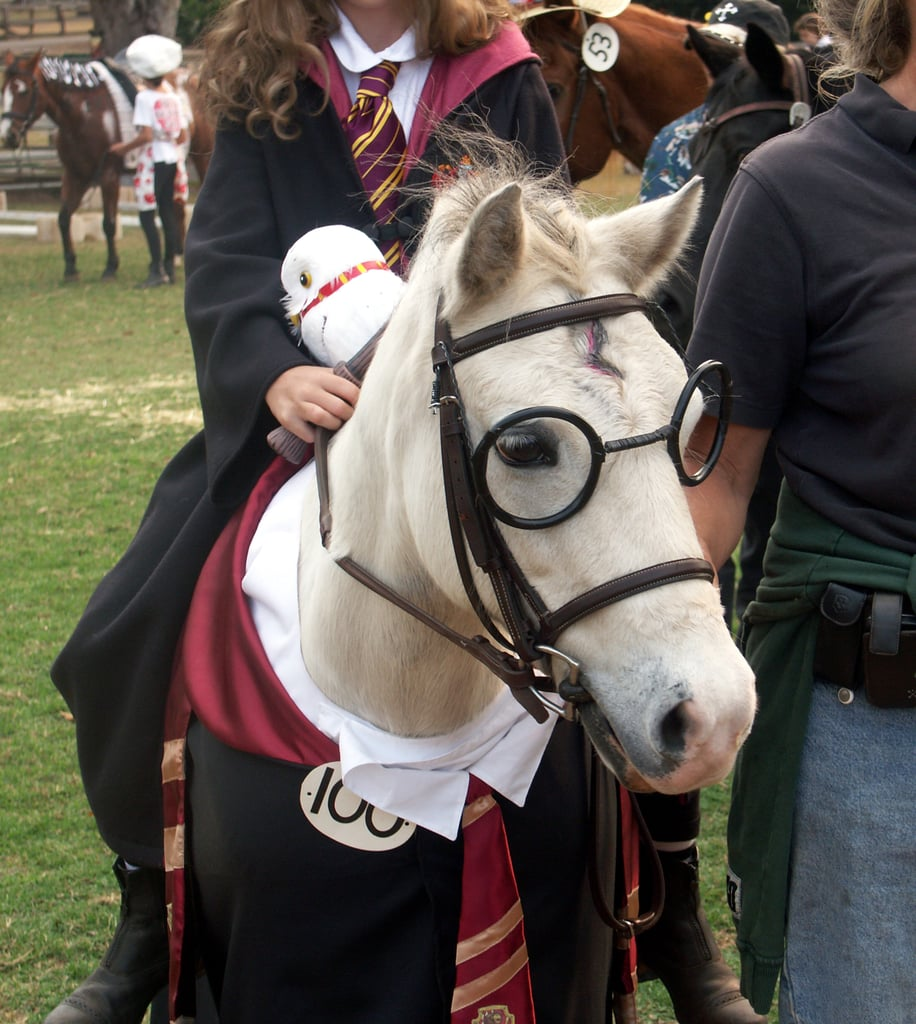 Harry the Horse?