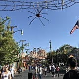 Spiders are strung across Cars land.