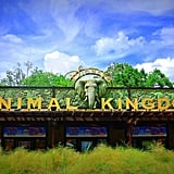 Animal Kingdom is Disney World's largest theme park.