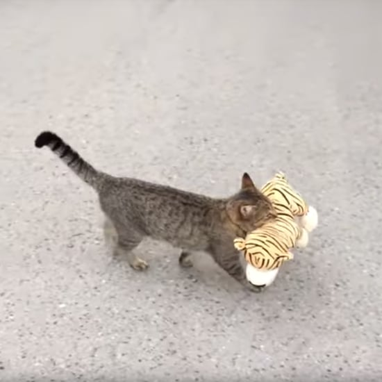 Viral Video of a Cat Walking With a Stuffed Animal