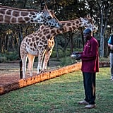 Stay at Giraffe Manor in Kenya