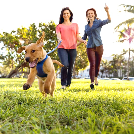 Do Dog Owners Exercise More?