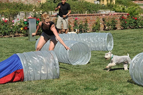 Greatest American Dog: Brandy Tells All to PetSugar!