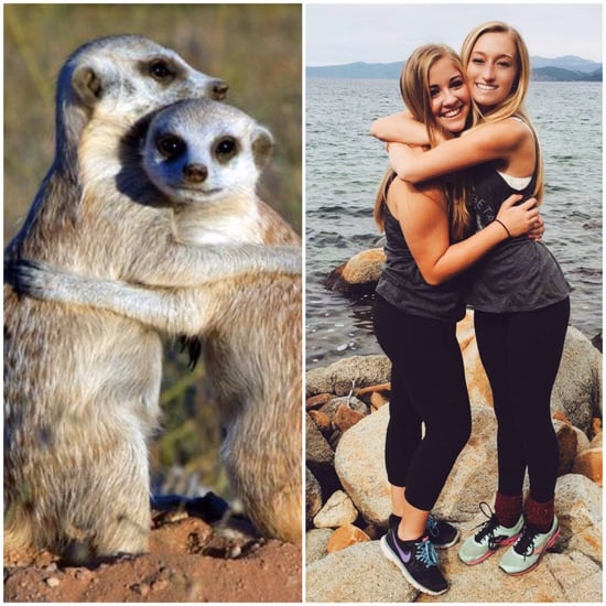 Sorority Girls Posing Like Meerkats Meme