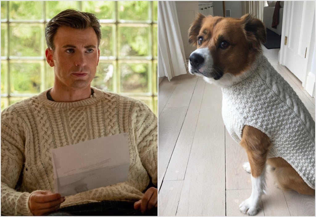Chris Evans Gave His Dog a Matching Knives Out Sweater