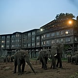 Treetops Hotel — Aberdare National Park, Kenya