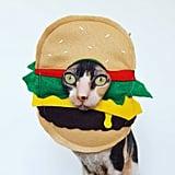Cheeseburger Pet Costume