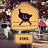 The funny signs put up around the park.