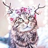 A little reindeer inspiration, anyone?