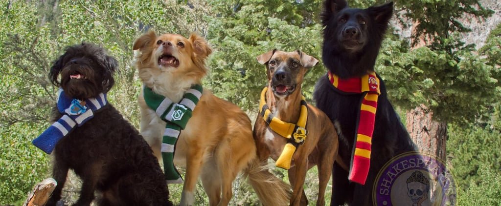 Harry Potter Costumes For Dogs and Cats
