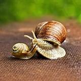 Les Soins à La Bave D'escargot