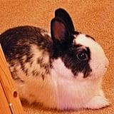 Pet Pic of the Day: Benjamin Bunny