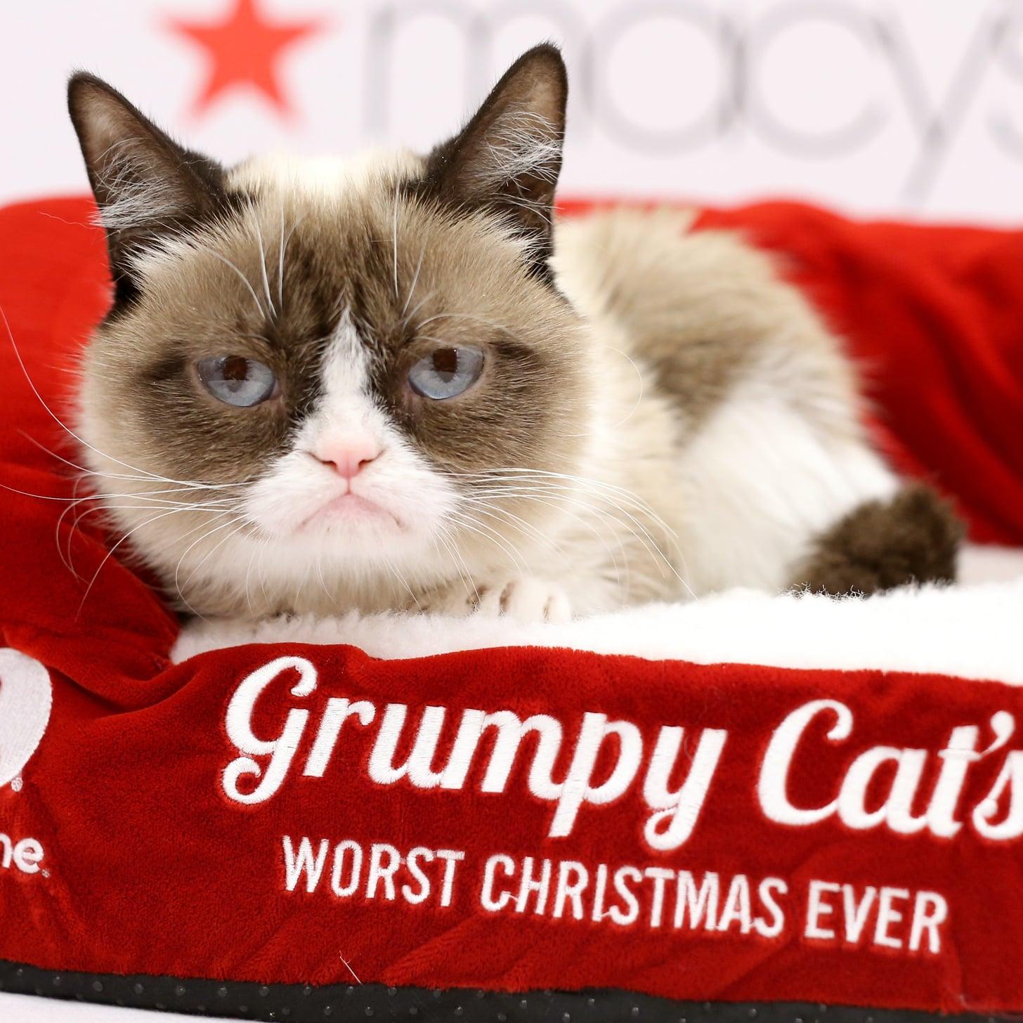 Grumpy Cat | POPSUGAR Tech