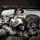 Bran's Direwolf Summer, Game of Thrones