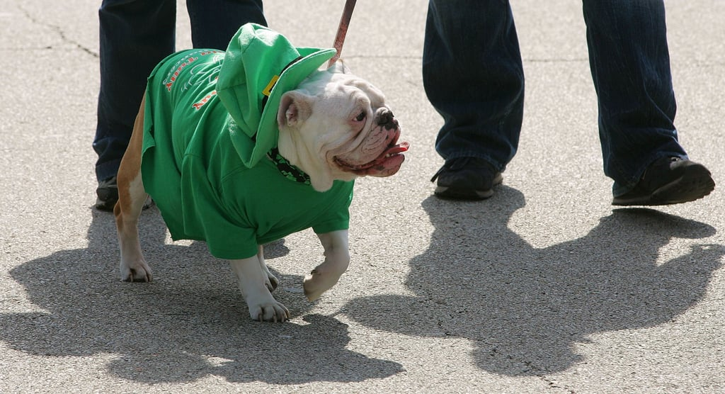 Dogs, too, get into the holiday spirit, wearing little green sweaters.