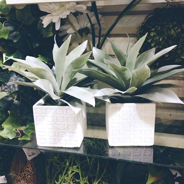 The finds: simple potted plants to brighten up any room.