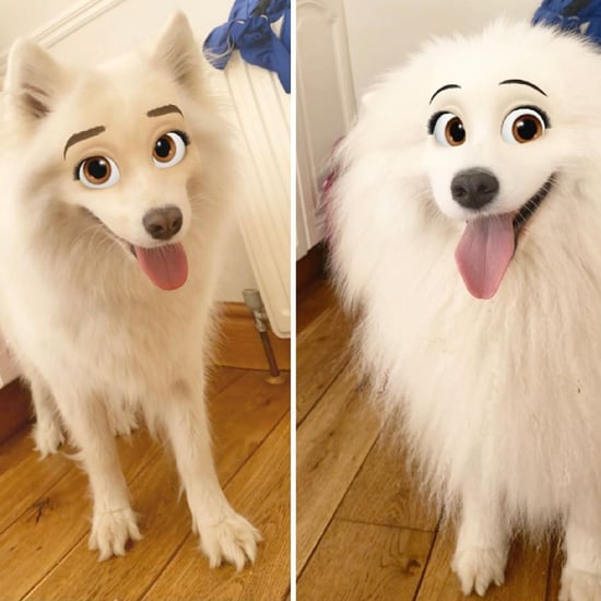 Snapchat Filter That Turns Pets Into Disney Characters