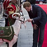 Harry pet a goat at the 50th anniversary screening of his favorite film, Zulu, in June 2014.