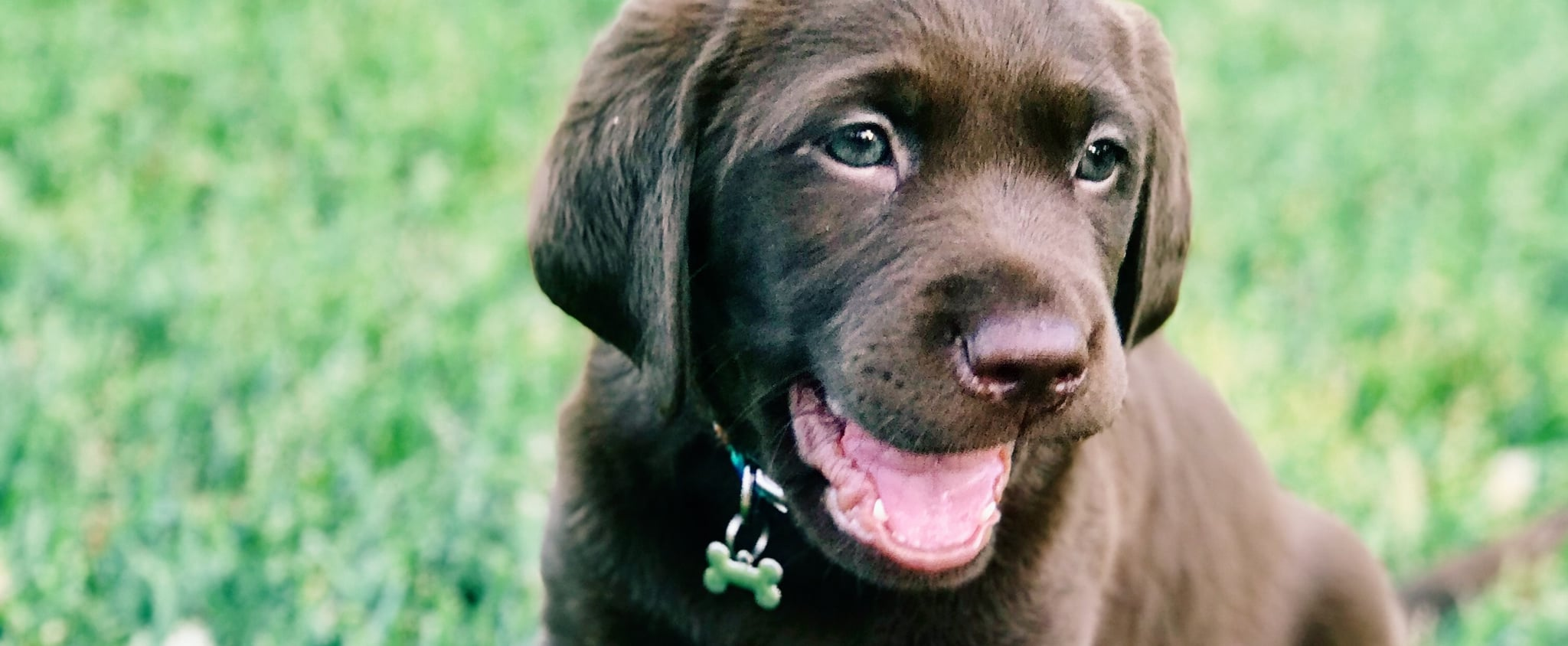 Cute Puppy Names For Girl Dogs