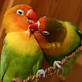 Lovebirds . . . literally! I'm smitten.