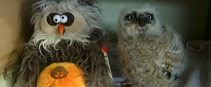 Owl Imitates Stuffed Animal | Video
