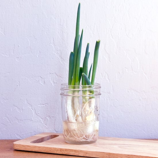 How to Regrow Green Onions in Water