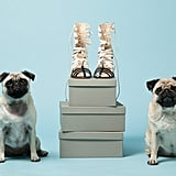 Pugs Gladys, left, and Peggy with Bionda Castana's Cream Leather Kiki Cage Heels ($940). Photo courtesy of Avenue32.